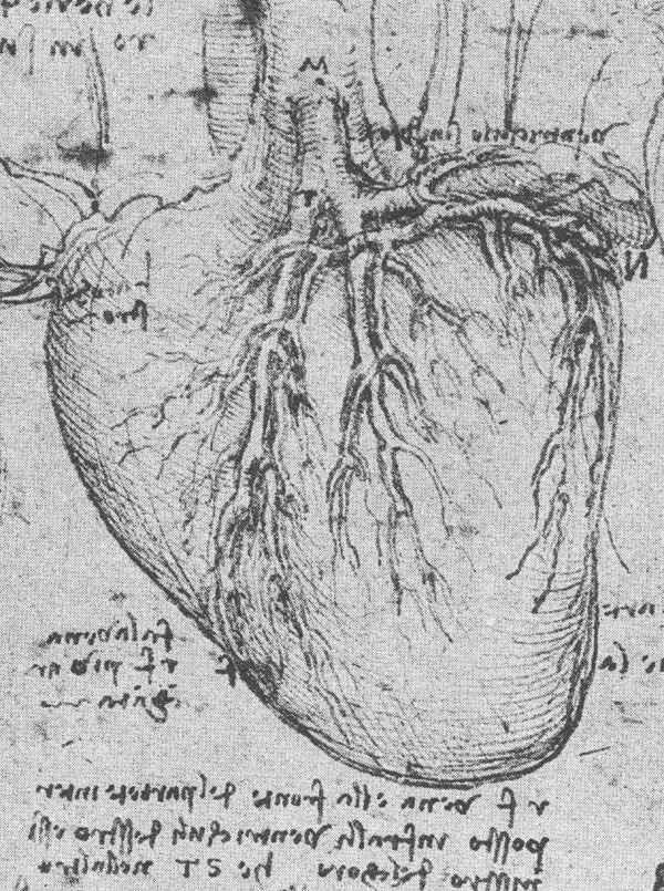 Da Vinci And The Heart  Anatomical Exploration Through The Eyes Of Leonardo